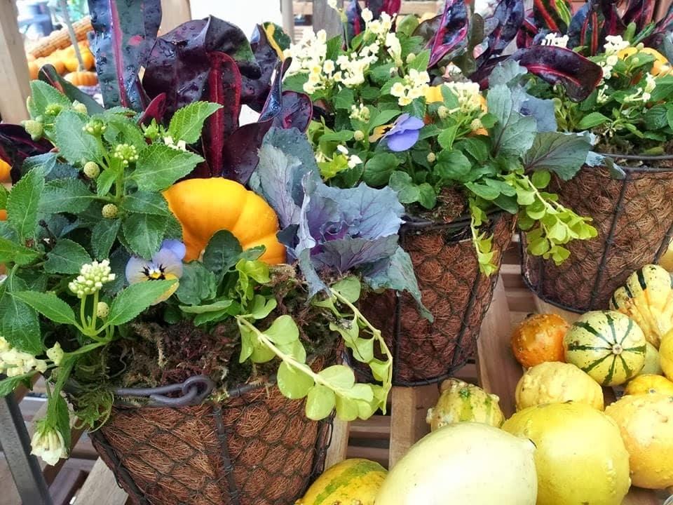 Fall Planters Sloat Garden Center