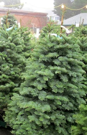 4 Tips For Taking Care Of Your Christmas Tree Sloat