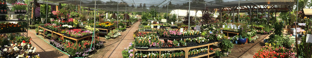 danville sloat garden center