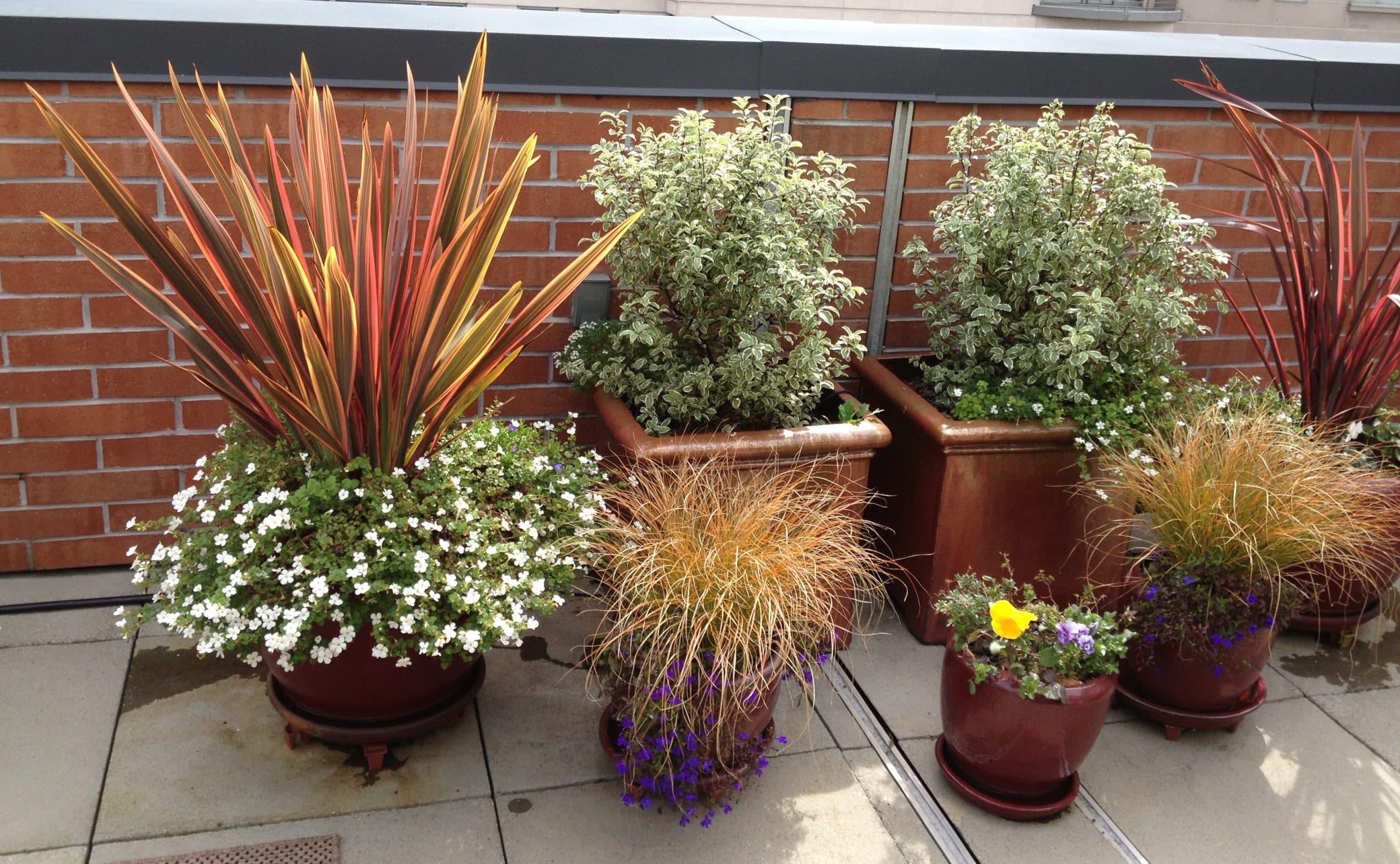 Garden Design Department - Sloat Garden Center