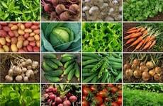 vegetable squares