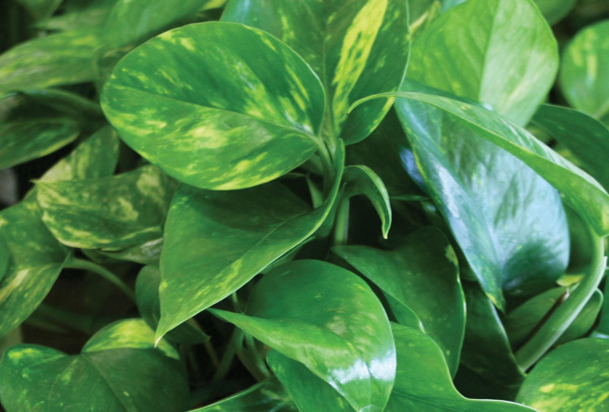 5 Easy Care Houseplants You Ll Love Sloat Garden Center