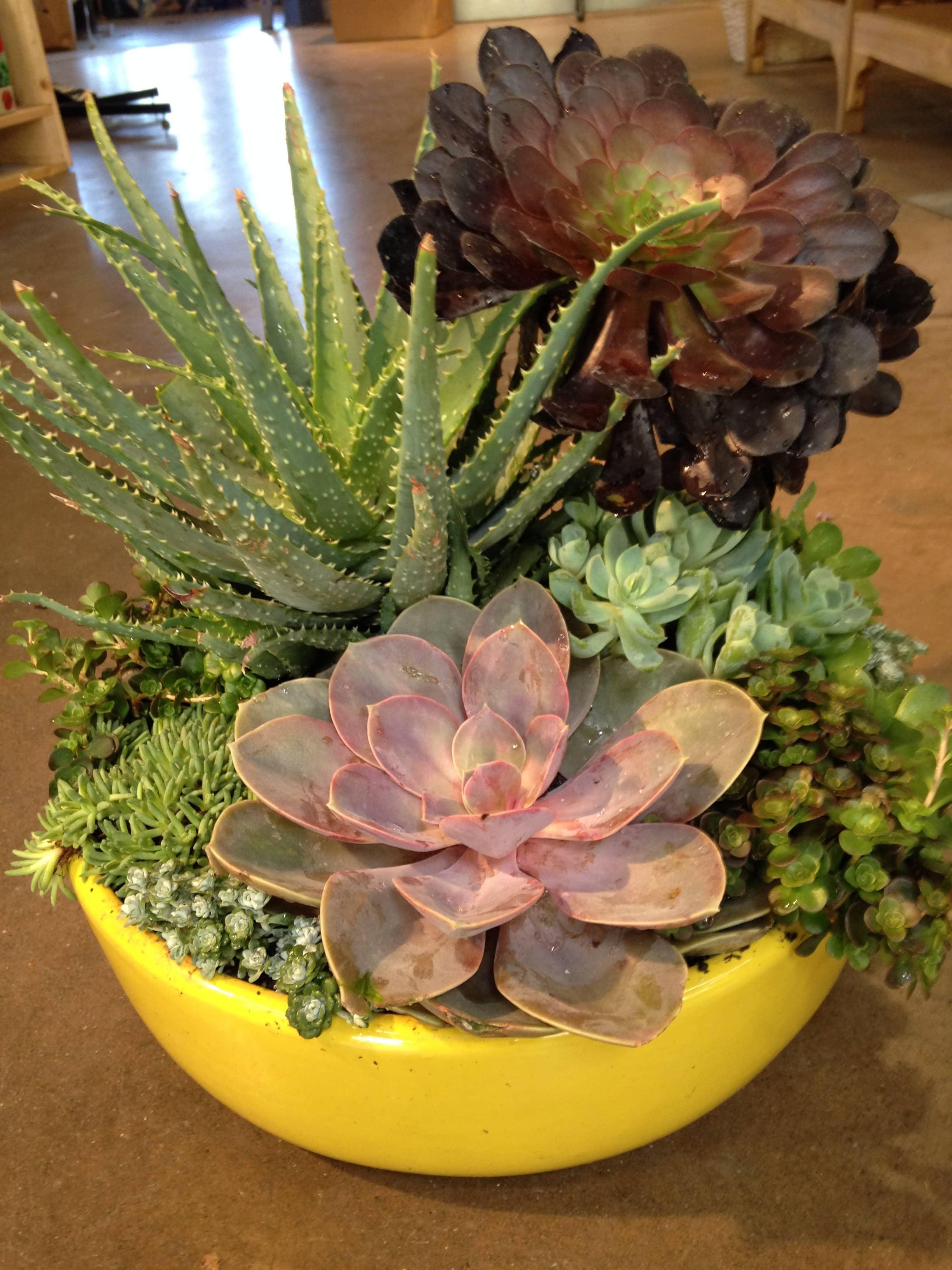 Succulent Planter Sloat Garden Center