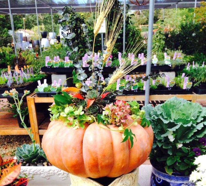 Fall Planter Sloat Garden Center