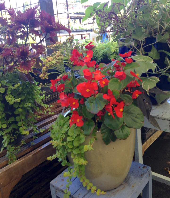 Sue Has Been Making Some Awesome Custom Planters At 10 Sloat Garden Center