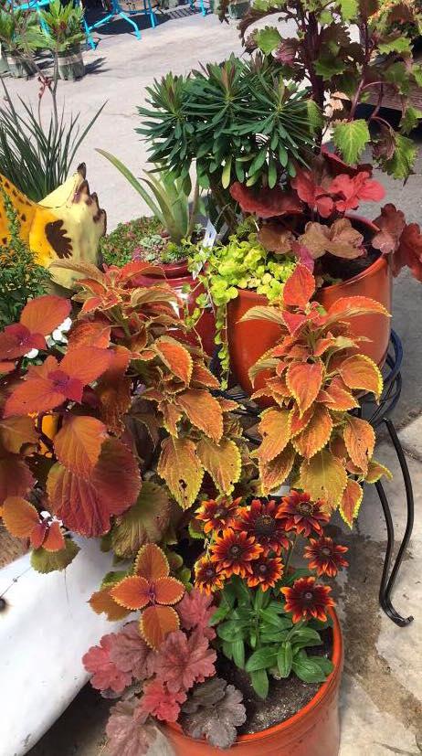 Concord Fall Custom Planter Sloat Garden Center