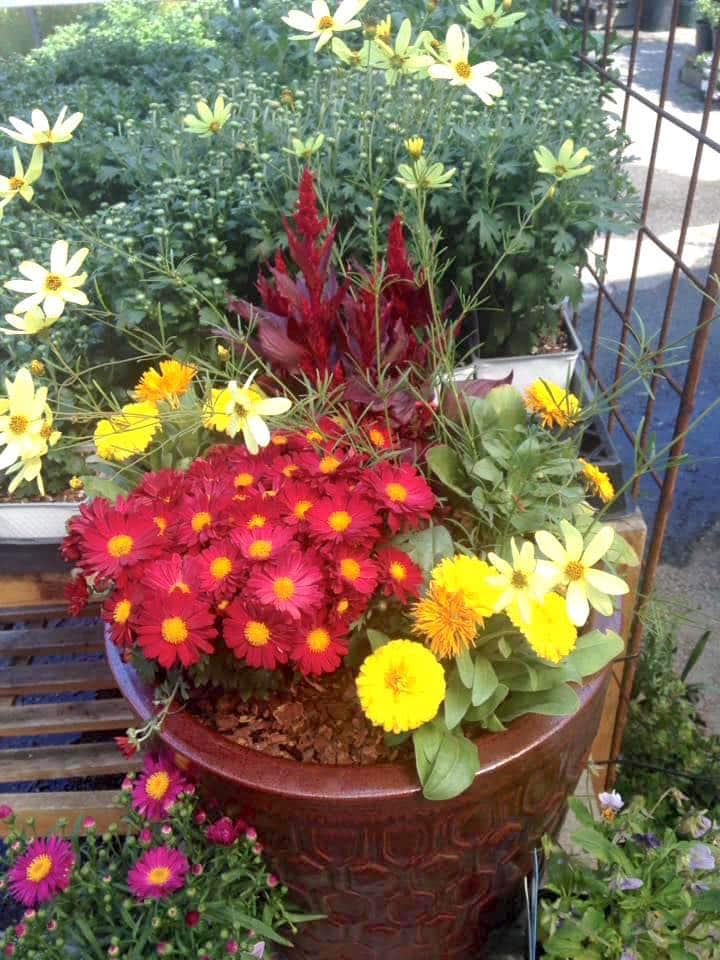 Fall Custom Planter 16 Sloat Garden Center