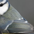 frost bird