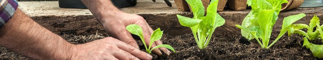 gardening header