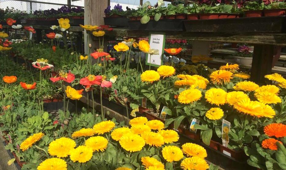 Pleasant Hill Plants Sloat Garden Center