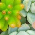 succulent header