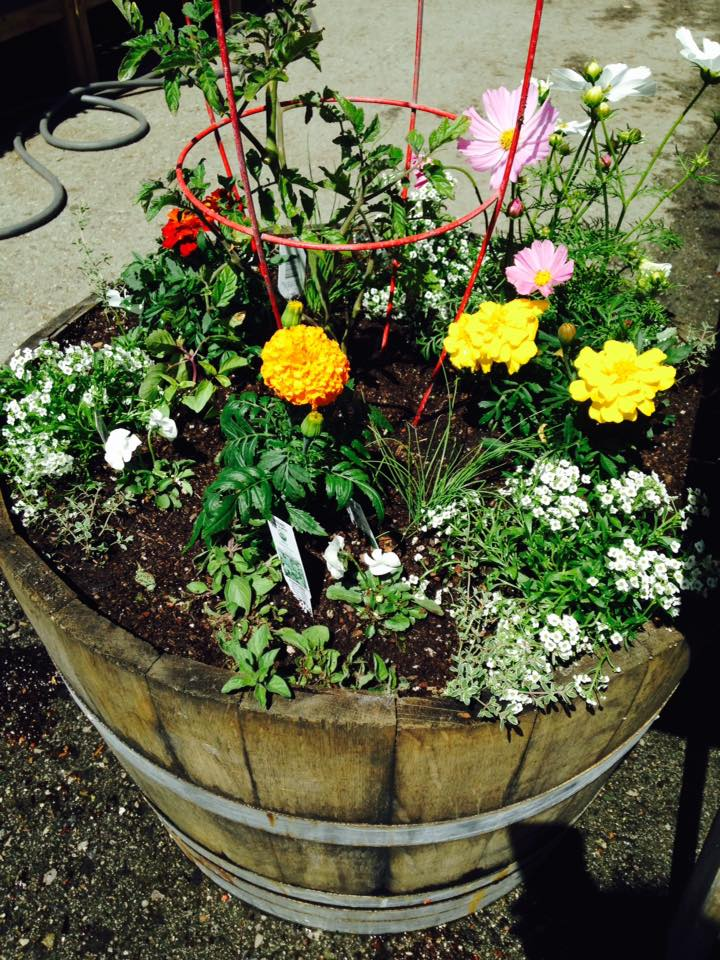 5 Steps How to Plant a MiniGarden Sloat Garden Center – Steps to Planting a Garden