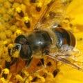 pollinator slide