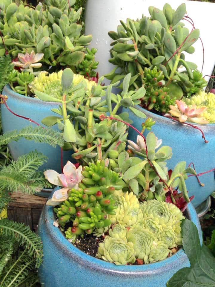 Custom Planter Sloat Garden Center