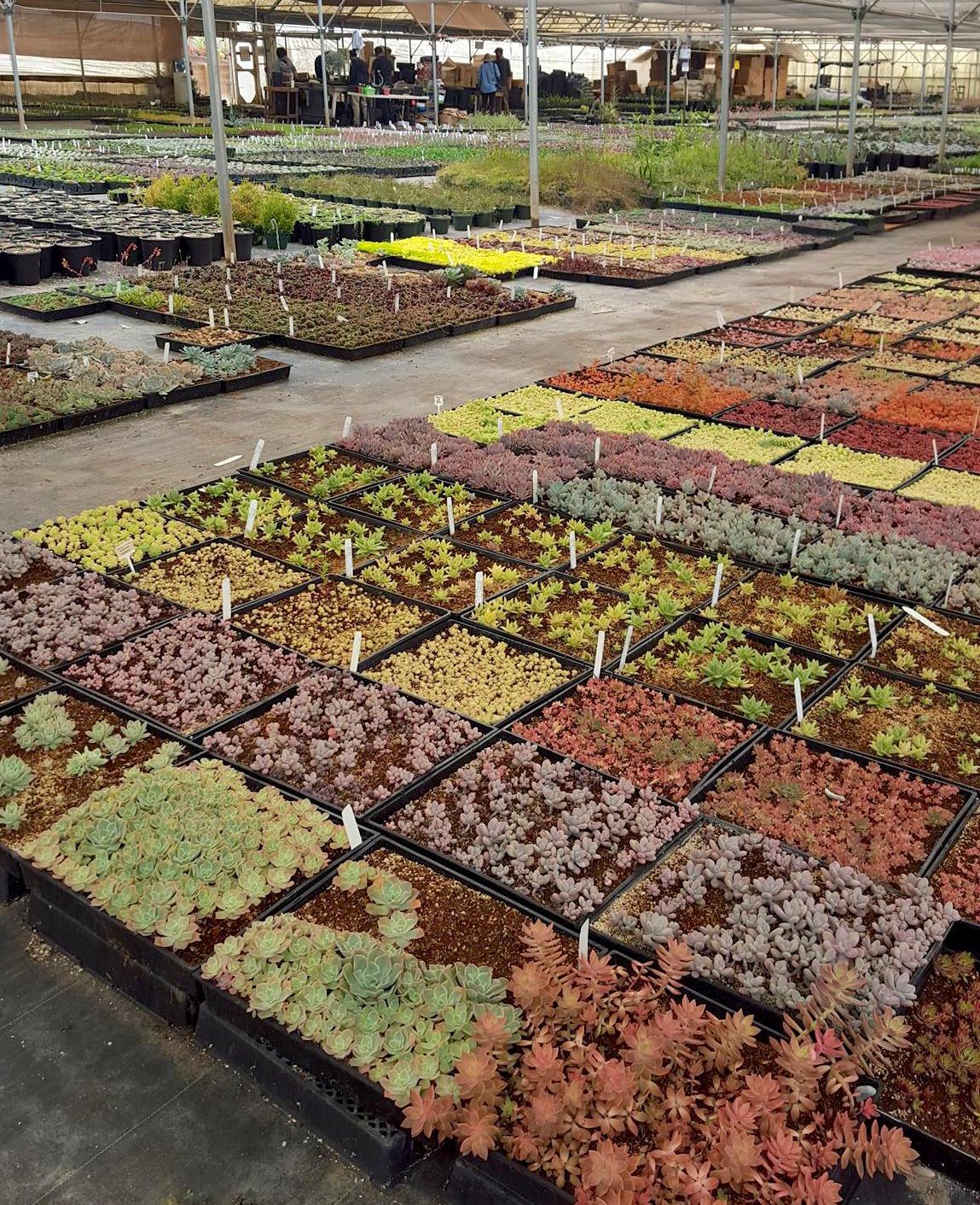 Succulents Sloat Garden Center