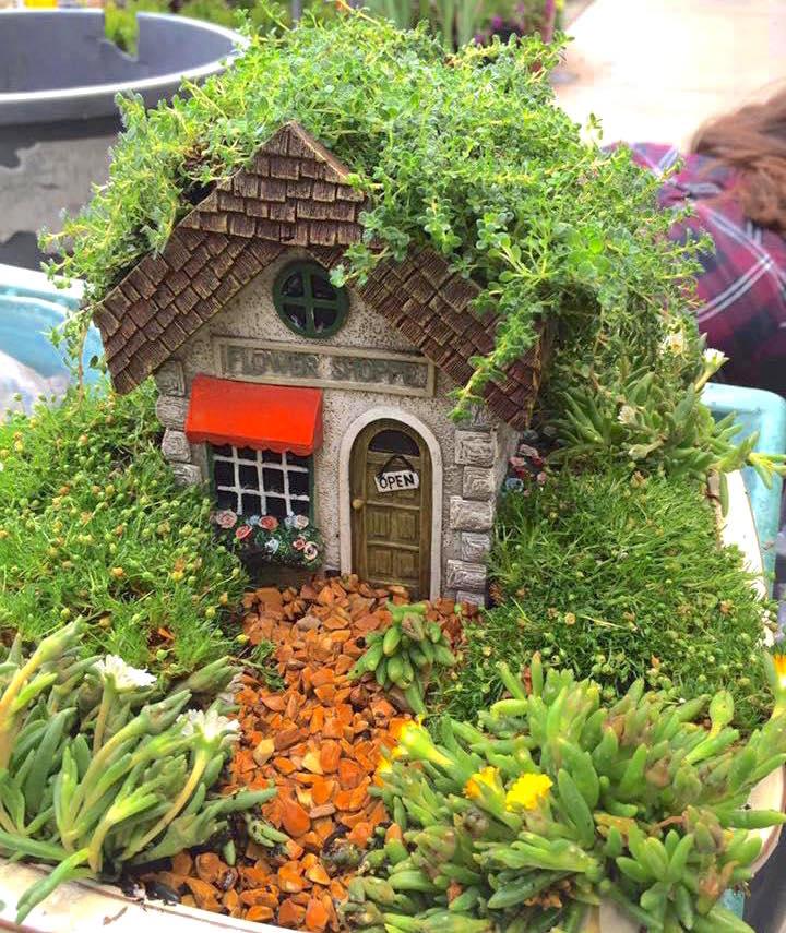 Succulent Fairy Garden Sloat Garden Center
