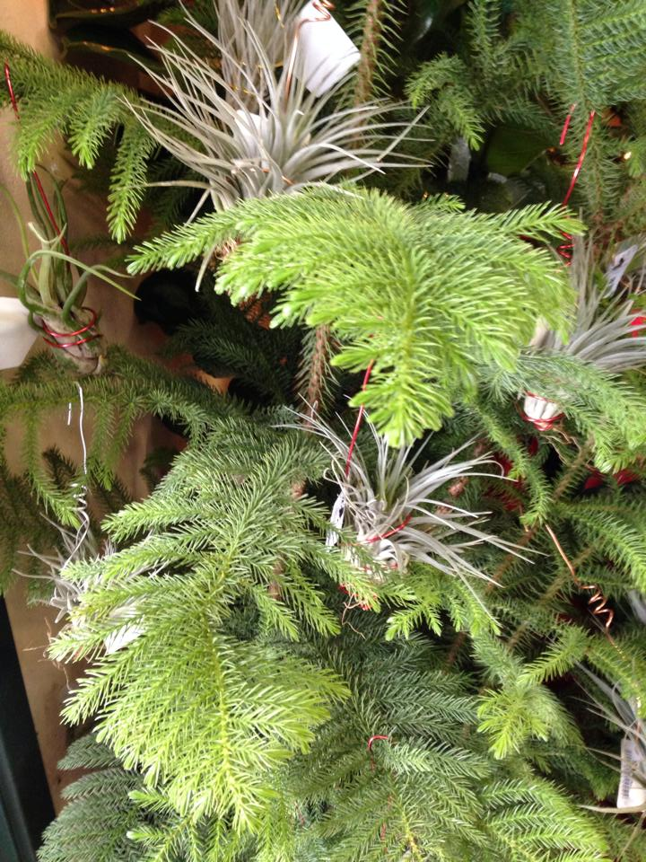 Tillandsia Tree Sloat Garden Center