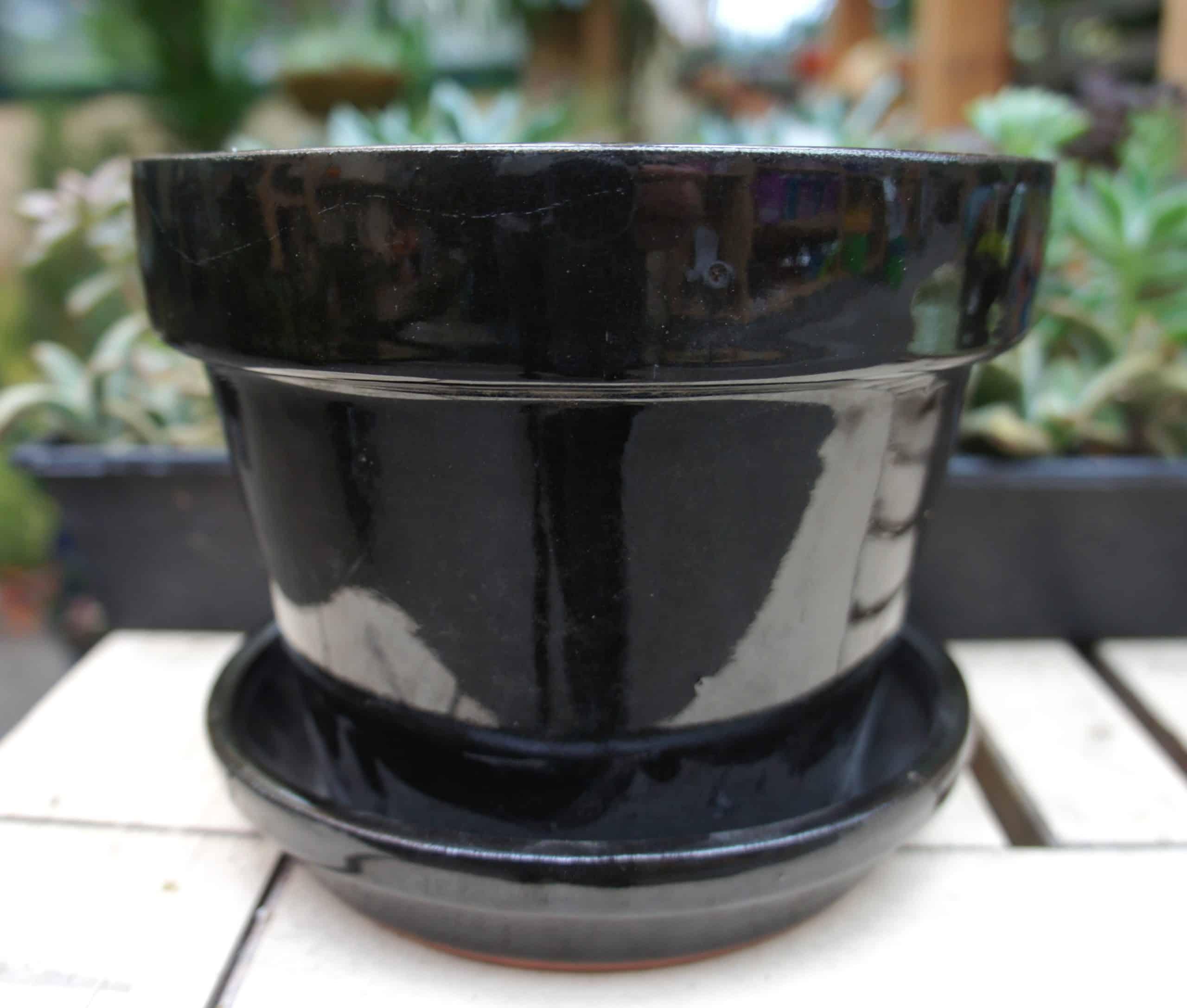 Lotus Pottery