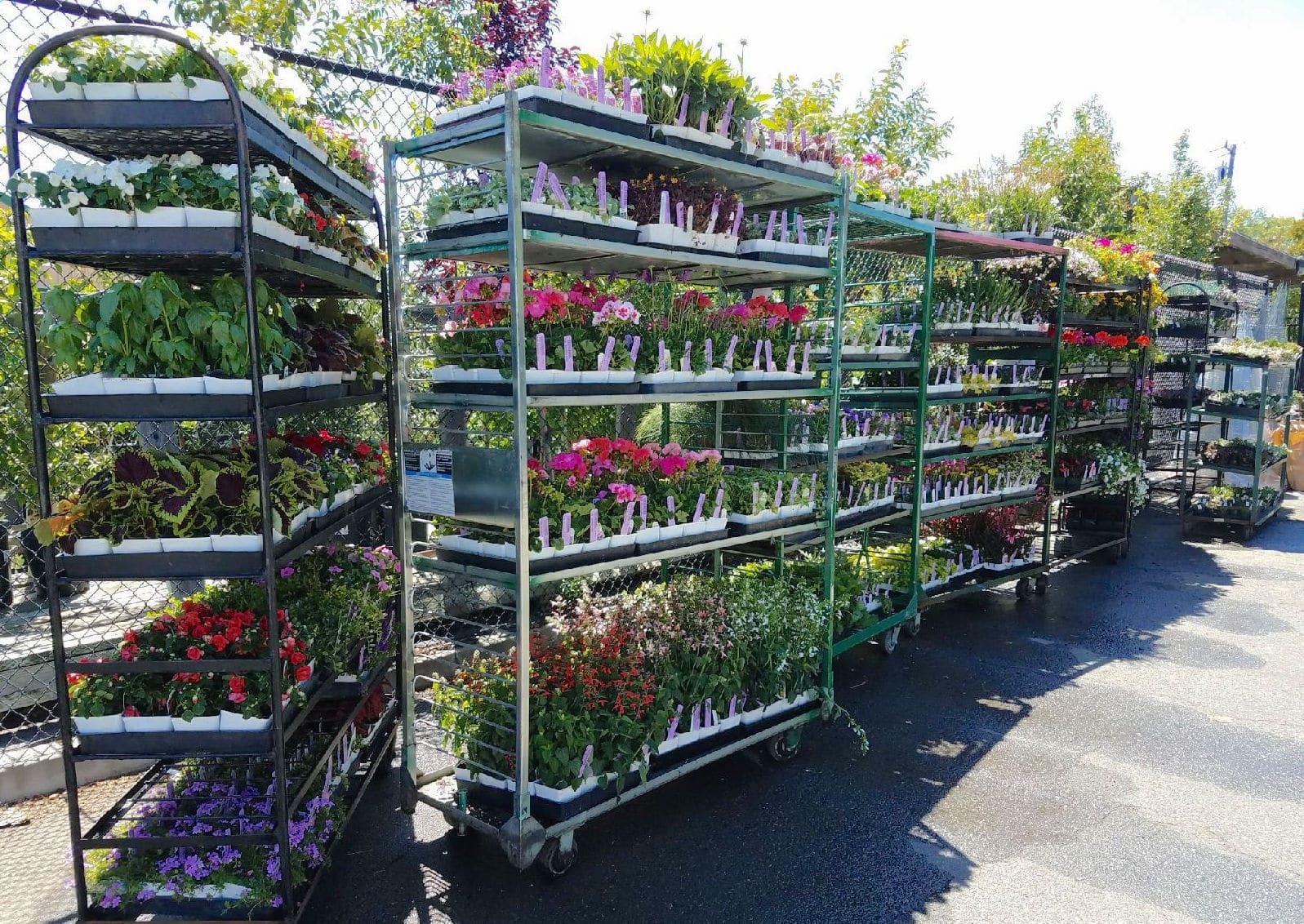 Solstice Plants Sloat Garden Center