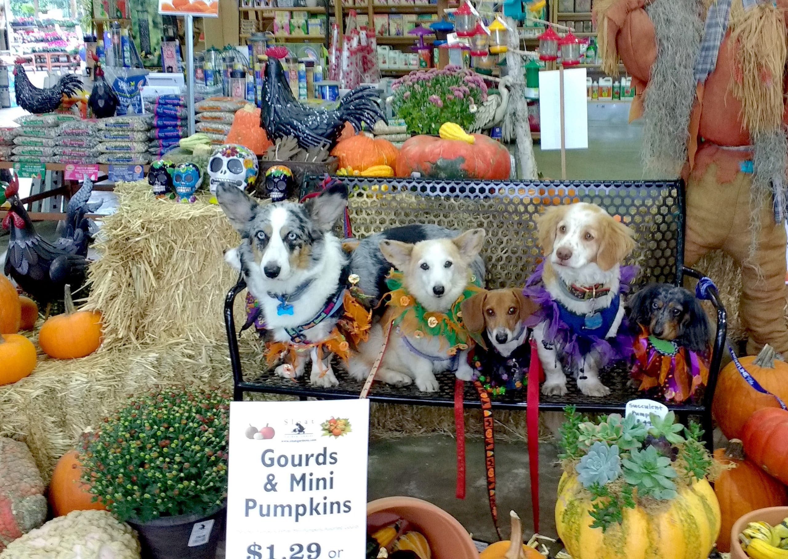 Dog Portrait At Our Pleasant Hill Store Sloat Garden Center