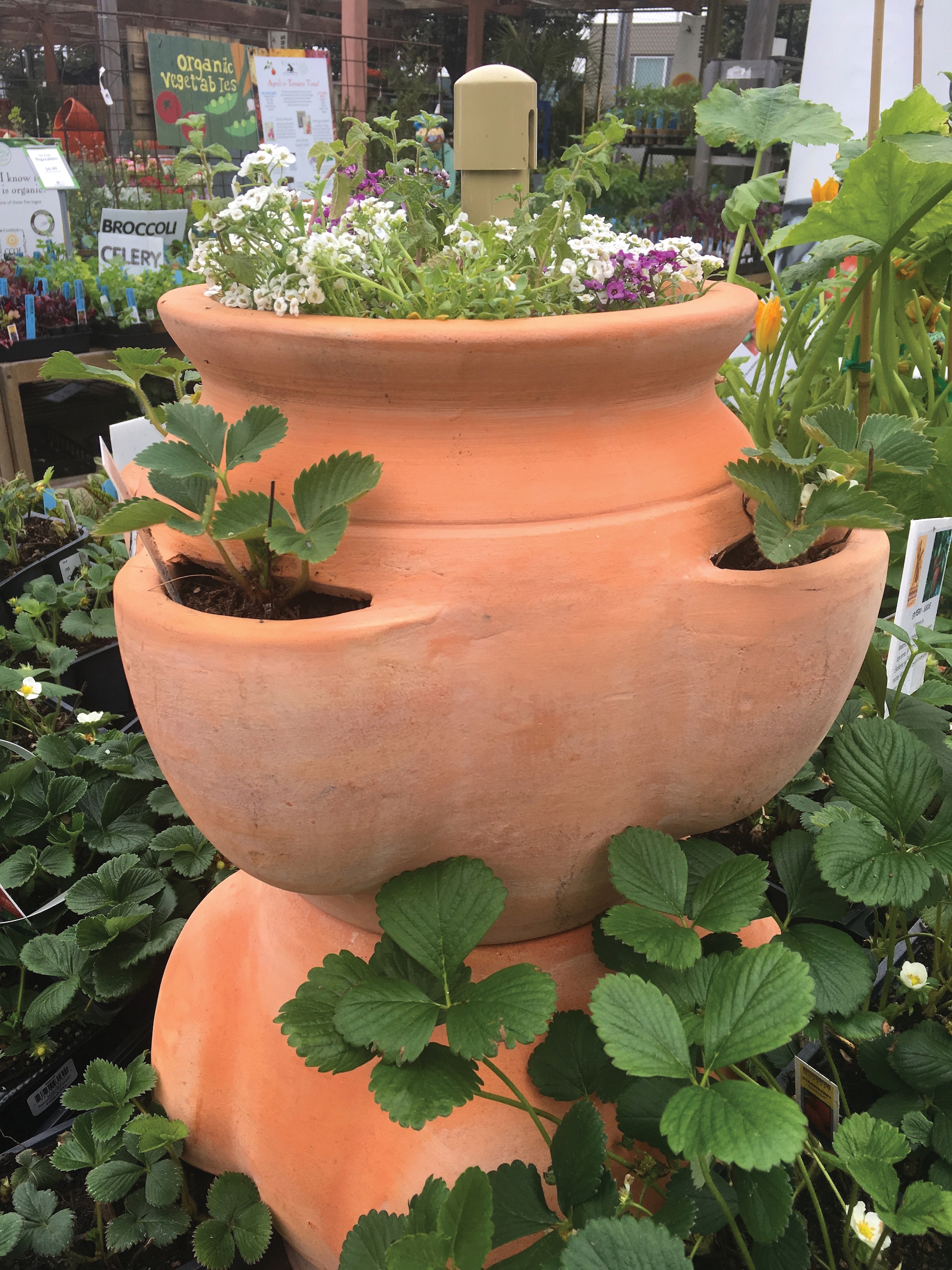 Pottery Sloat Garden Center