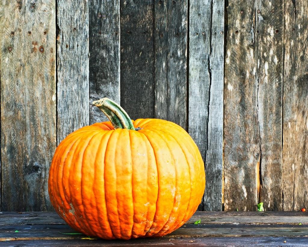 October is for pumpkins at Sloat Garden Center: Day 17 ...