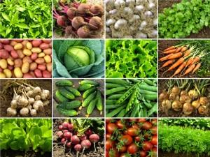edible squares