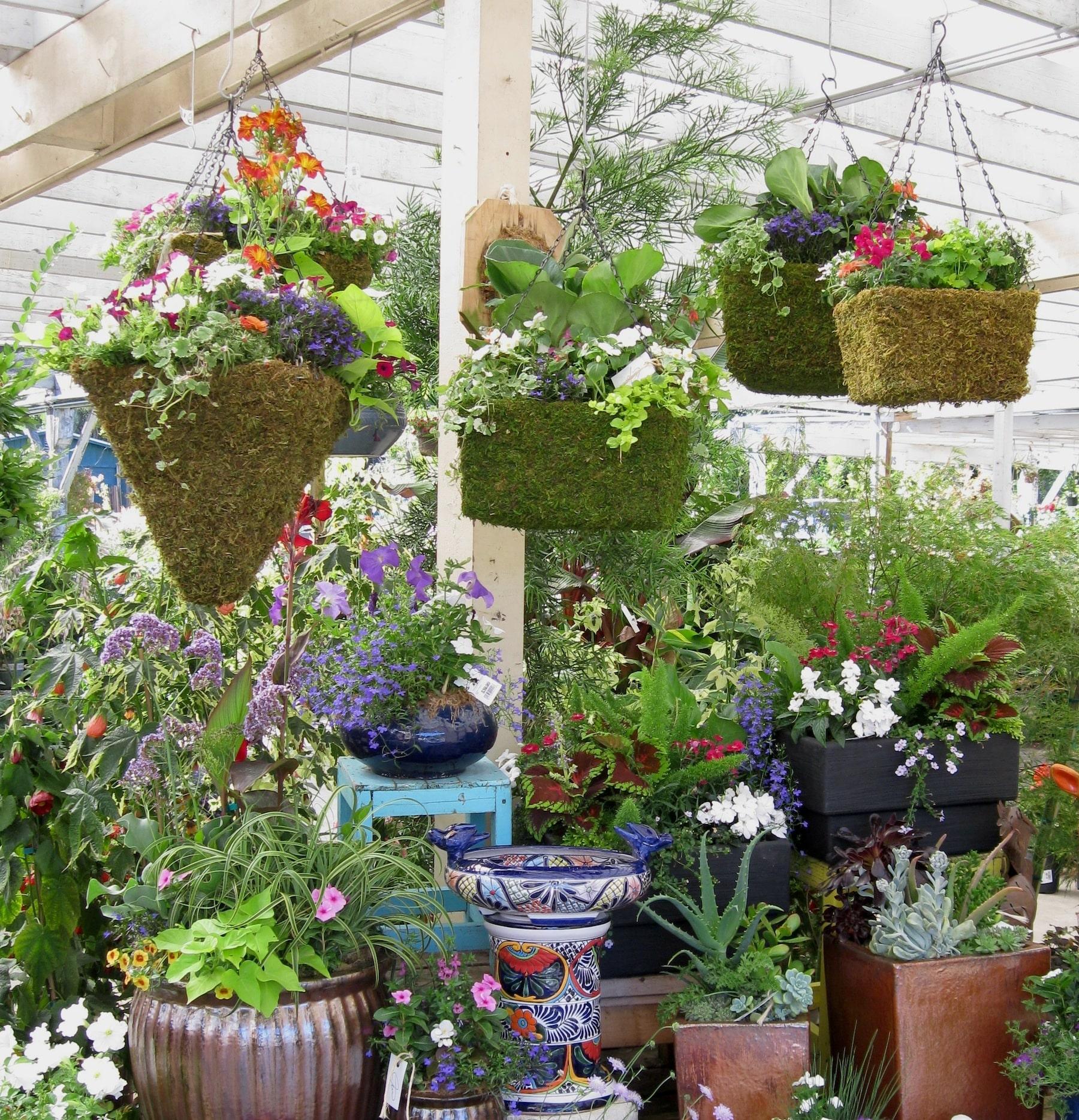 Garden Centre: Sloat Garden Center