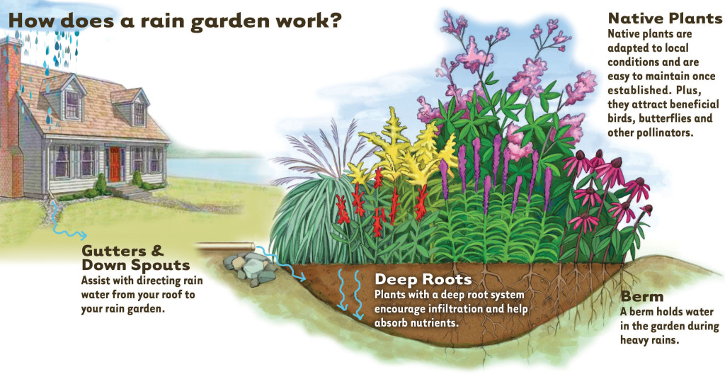 Building a rain garden: Slow rain down, spread it out, soak ... on rain illustration, rain barrels, bioswale design, rain gardens 101, rain art drawings, rain gutter downspout design, rain roses, gasification design, rain harvesting system design, french drain design, dry well design, rain water design, rain construction,
