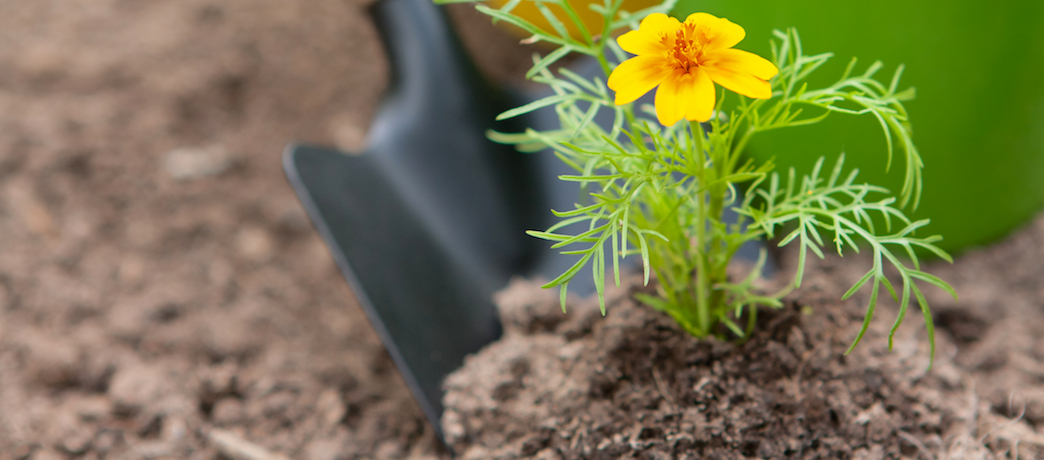 How to plant a plant in 8 steps - Sloat Garden Center