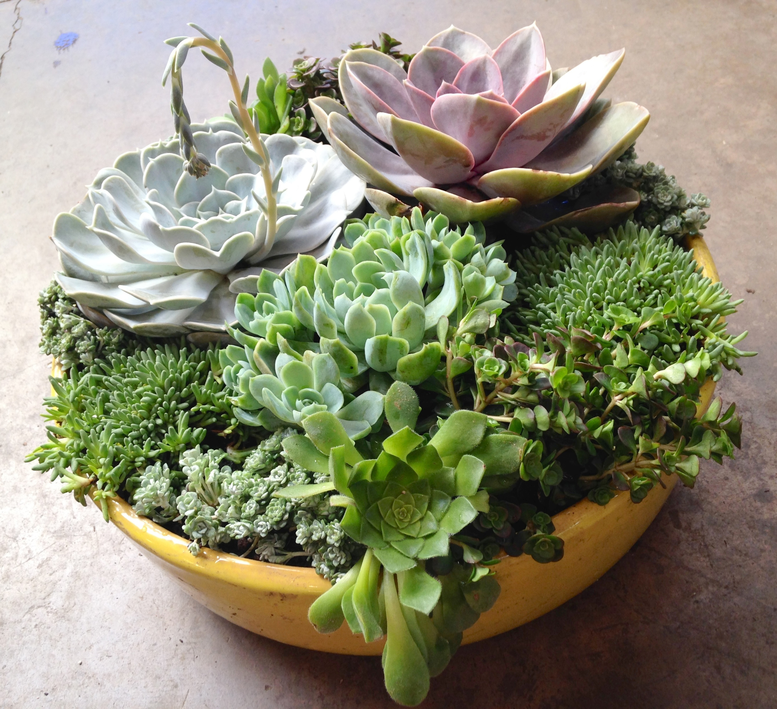 Fall entertaining succulent custom planters sloat for Deco jardin miniature