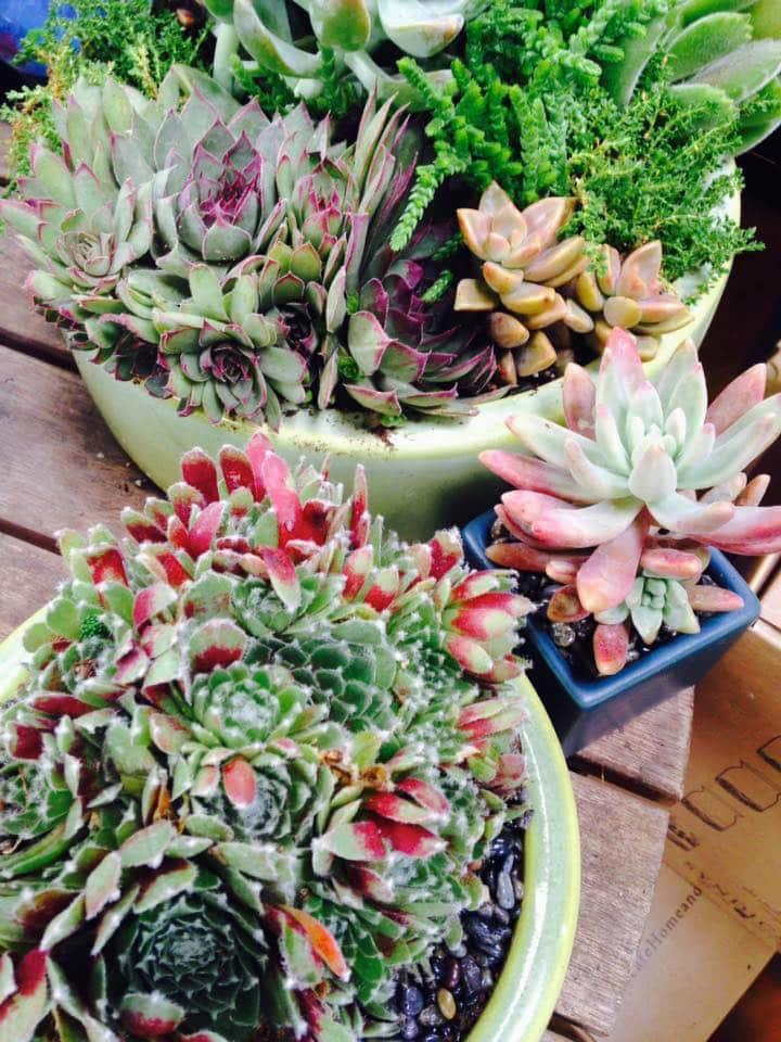 Succulent Custom Planter Aug2 Sloat Garden Center