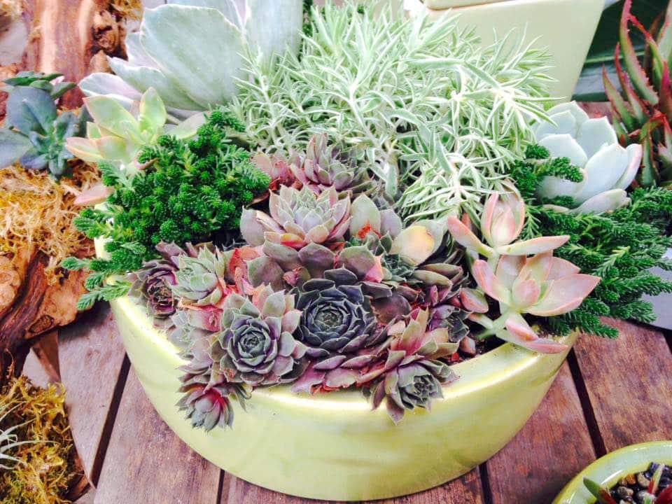 Succulent Custom Planter Aug4 Sloat Garden Center