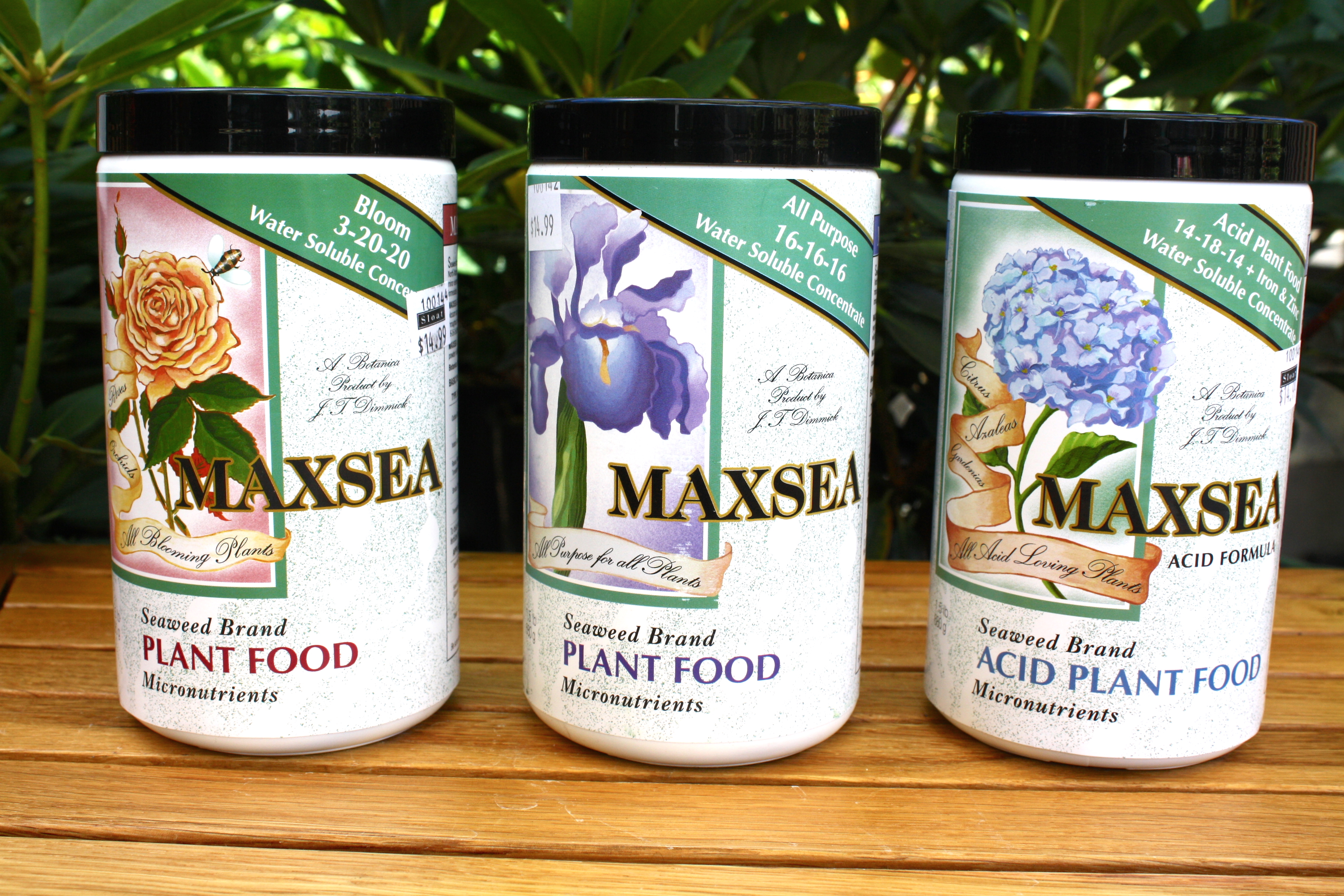 Meet our Family of Local Vendors & Growers: Maxsea plant