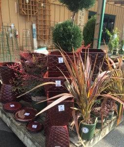 Pleasant Hill plants