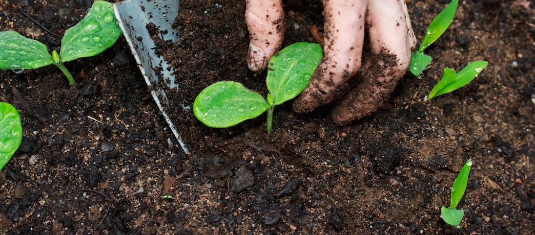 Ask The Garden Guru